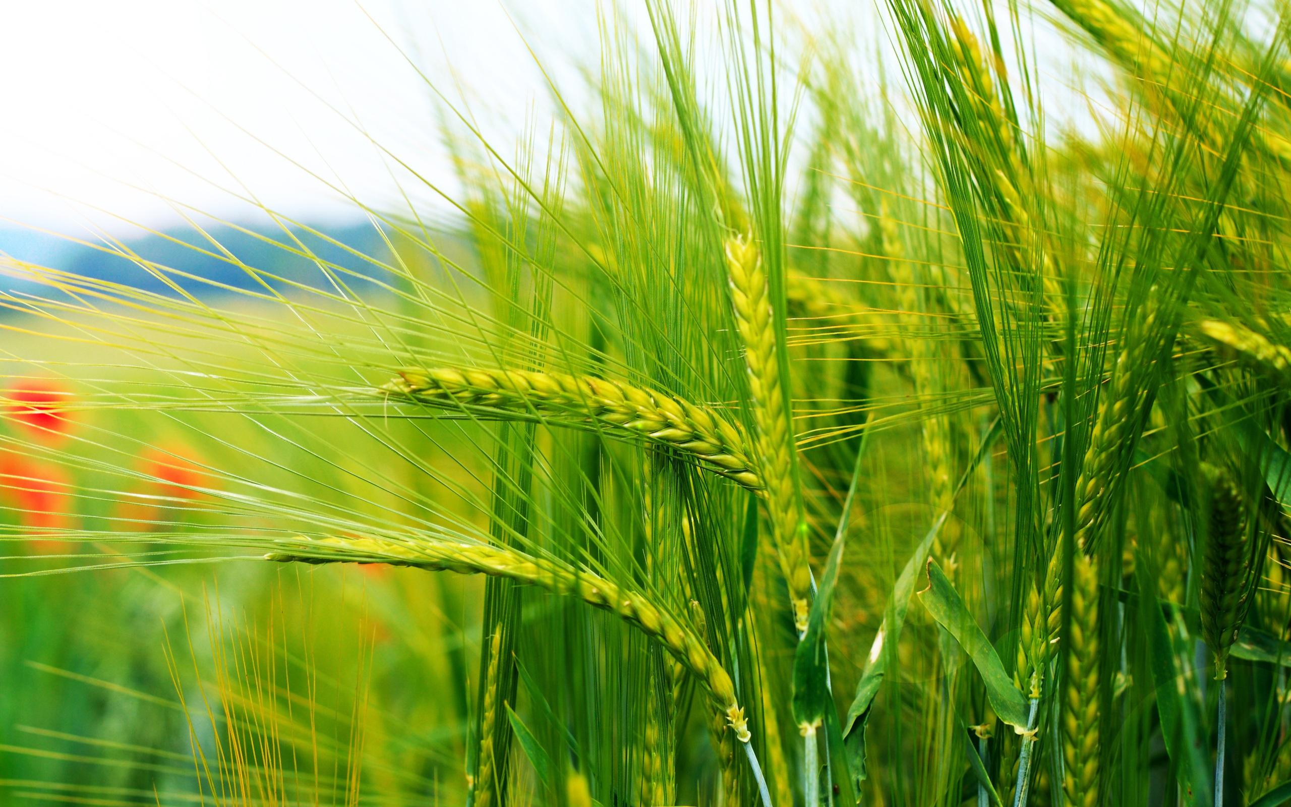 производство органических удобрений